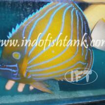 Indofishtank