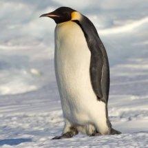 Penguin Online Store