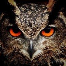 Owl Store - Tokoawn