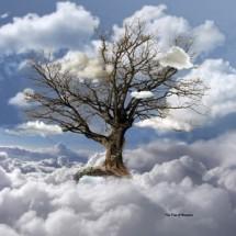 treeheaven