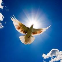 White - Dove