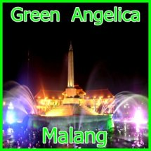 MALANG GREEN ANGELICA