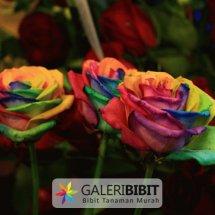 Galeri Bibit