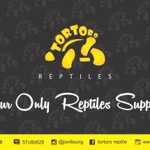 Logo tortoro reptiles