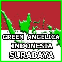 INDONESIA GREEN ANGELICA