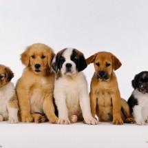 Von-Kennel Pet Shop