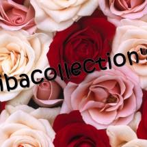 diba collection's