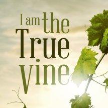 Logo True Vine Shop