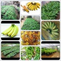 Pesona Agro Nursery