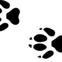 Logo von sakura nipon