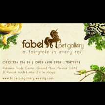 Fabel Pet Gallery