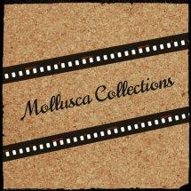 Molussca Collection