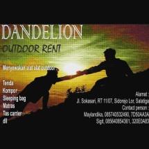 dandelion adventure