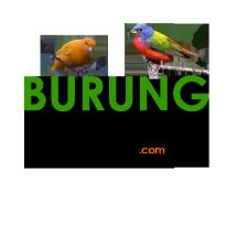 BURUNG HOBI