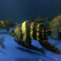 MM aquarium