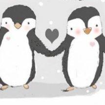 Little Pingu
