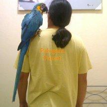 Palugada Parrot