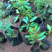 Indoanthurium