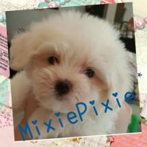 mixiepixie