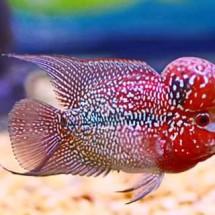 Umanfish