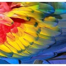 Logo parrotskin