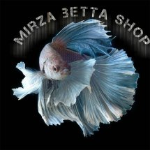 mirza betta shop