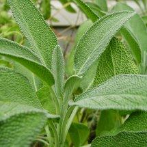 Herbal China Manjur