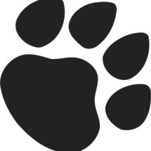 Hachico Pet Shop