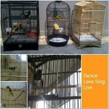DPbirds