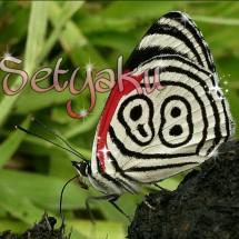 setyaku88