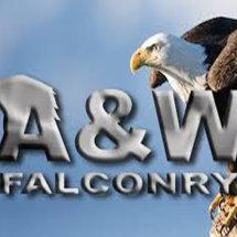 aw falconry