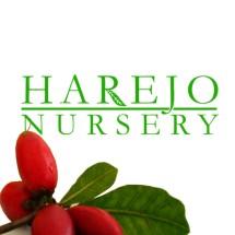 HAREJO NURSERY