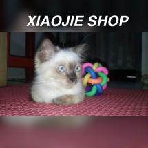 Xiaojie Shop