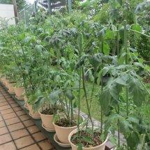perlengkapan berkebun
