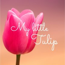 My Little Tulip