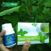Diabetes Daun Yakon