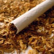 Tembakau online