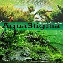 aquastigma