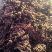 Sarang Semut Sorong