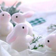 Bunny e-Shop