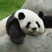 PandaDiecast