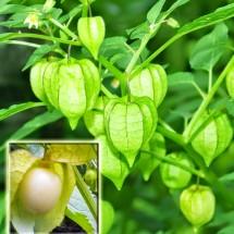 herbal alami indonesia