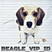 Beagle VIP Shop