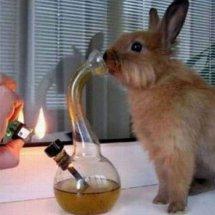 rabbit smoke