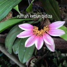 Qidiza