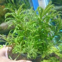 kokobok aquascape