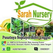 Sarah Nursery