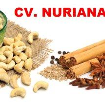 CV Nuriana
