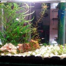 Ertees Aquarium