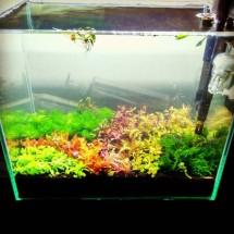Aquatic plants andang